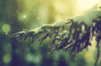 inverno della creatività